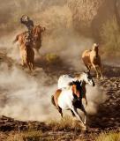 Hooves & Dust 28