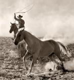 Hooves & Dust 29