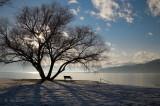 The Shade Tree - Winter