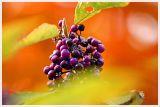 Fall Berries 2