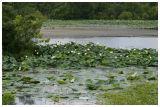 Waterfowl Refuge