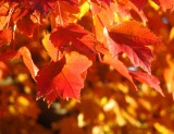 More of Autumn Leaves