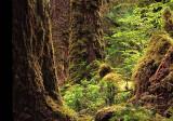 Queen charlotte forest