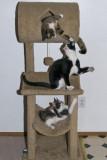 My pet family - 2009