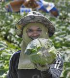 The Cabbage Picker.jpg