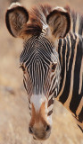 Samburu/Buffalo Springs