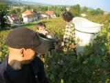 Vendange 2008 02.jpg