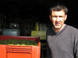 Vendange 2008 05.jpg