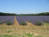 Provence 2009 006.jpg