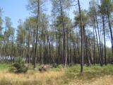 Lande 2010 32.jpg