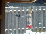 Winter Hummingbird Heaters