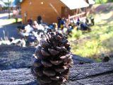 cabin-pine-cone2.jpg
