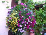 leavenworth-flowers.jpg