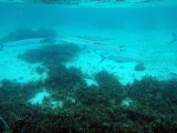 Snorkeling in the clear shallow water of Tumon Bay