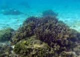 Coral of Tumon Bay, Guam