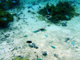 Reef fish,Tumon Bay