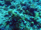 Shallow reef at the Blue Hole