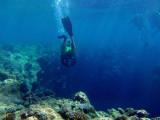 Diving into the Blue Hole, Palau