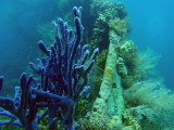 Bow of the Lusong Gunboat wreck