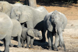 Elephants with a baby, Chobe National Park