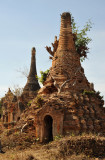 Stupa embedded with roots of a tree