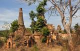 Tree engulfing a stupa, Nyaung Ohak