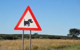 Warthogs, Trans-Kalahari Highway