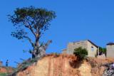 A sad baobab along Rio da Samba