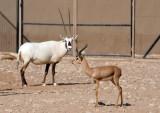 Al Ain Wildlife Park - Mixed Arabian Exhibit