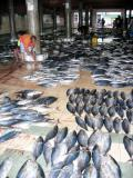 Fish market, Male'