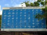 Protected bird species of the Maldives