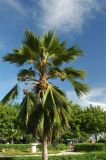 Palm, Dar es Salaam