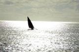 Outrigger sailboat, Dar es Salaam