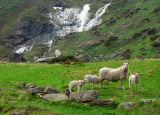 Sogndal to Jotunheimen National Park
