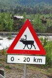Reindeer crossing, Norway