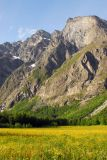 Field of yellow flowers and mountain, Romsdalen