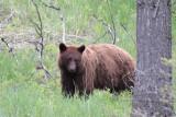 Bear 265
