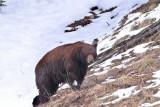 Bear 355
