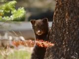 Bear 450