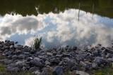 Susquehanna Wetlands