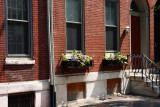 Pine Street Window Boxes