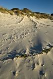 Dune Creepers