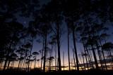 Sihlouette Pines  Luna St Joe Campsite