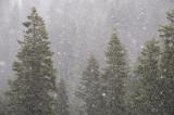 First Snow 04 Oct 09