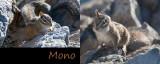 Mono Phonic