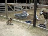 annabelle and the barn guys.jpg