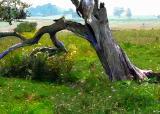 tree smart blur.jpg