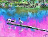 ll geese 8x10