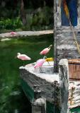 Flamingo_BayLAY copy.jpg
