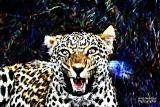 blurry leopard.jpg